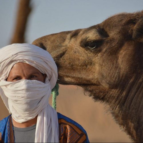 Hammid-Nomad-Guide-Camel-e1612180749140-1100x790